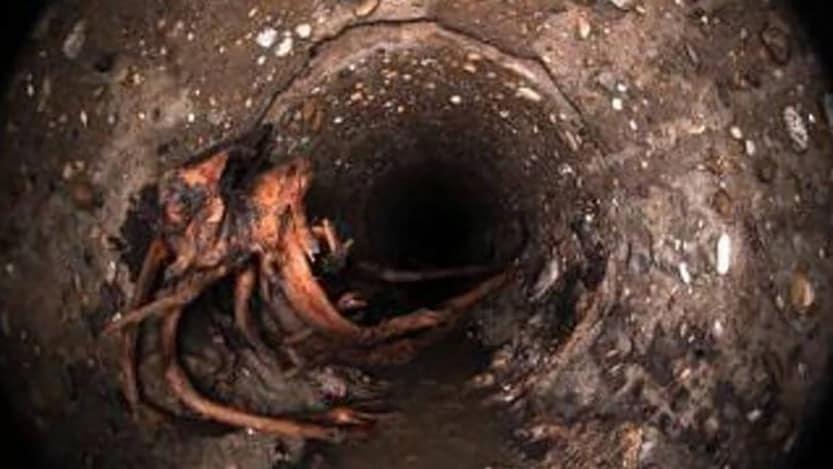 korene v kanalizacii